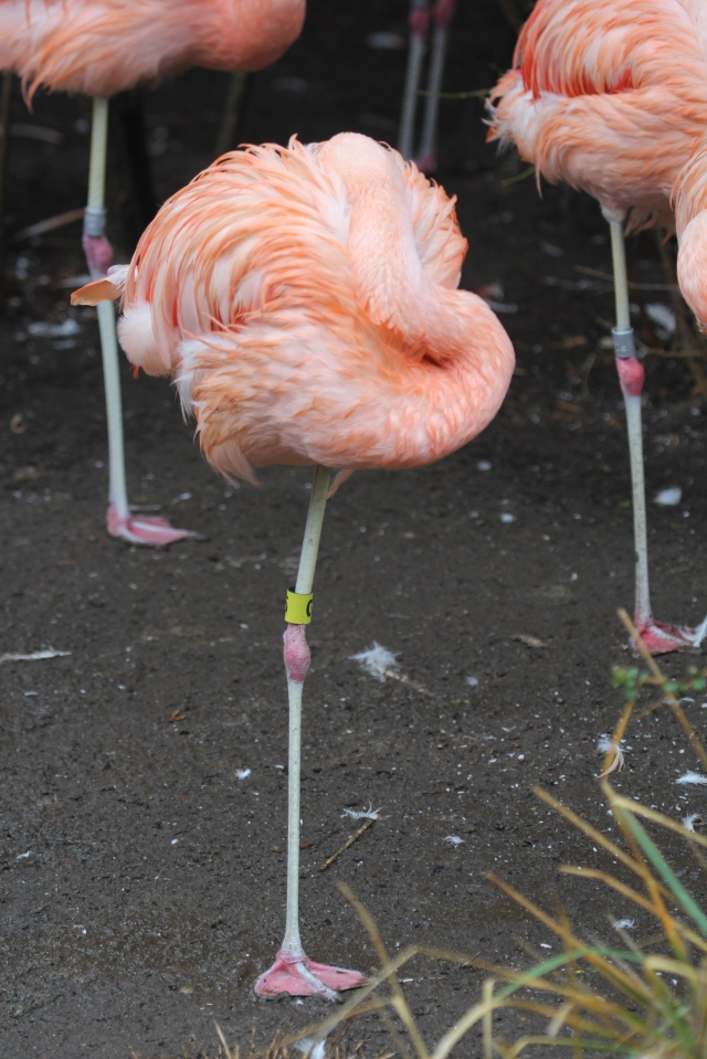 Silly flamingos