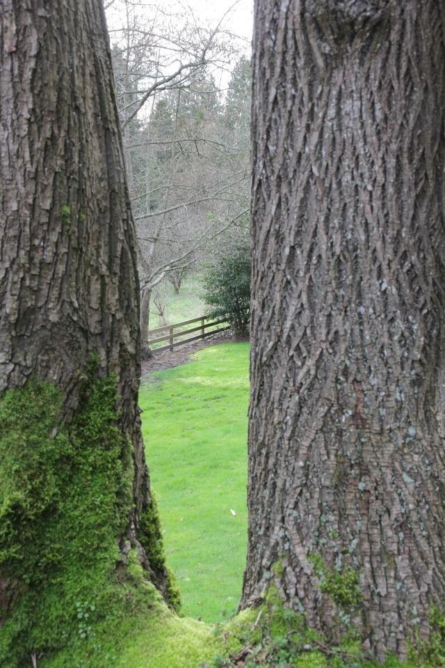 through two trees