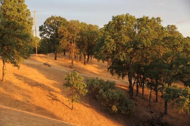 Sunset in Cottonwood