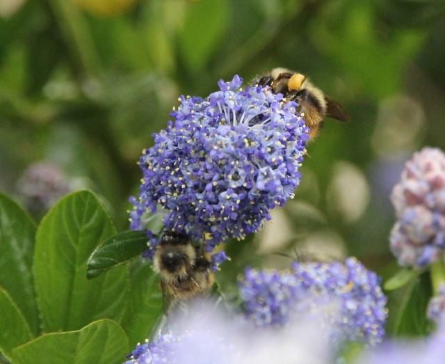 Movin pollen