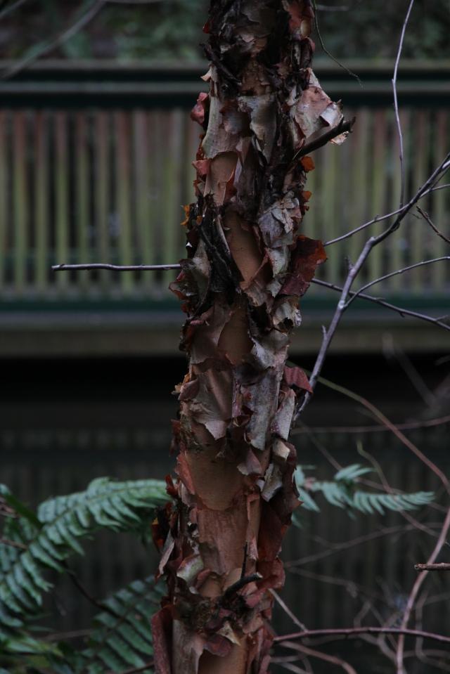 Gnarled bark