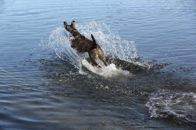 Jet-skiing dog