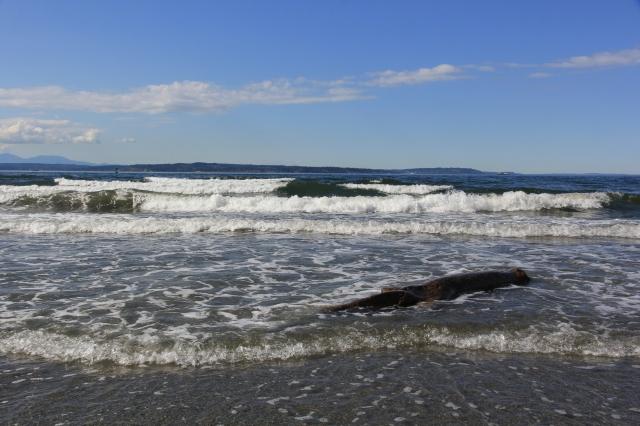 Spring waves