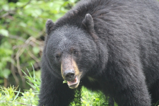 More BEAR!