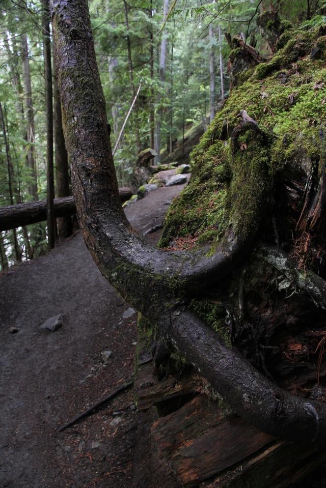 Twist-Tree