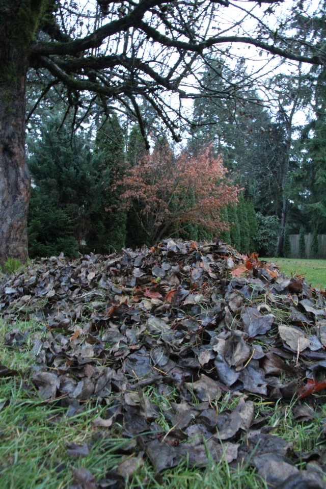 Pile O Leaves