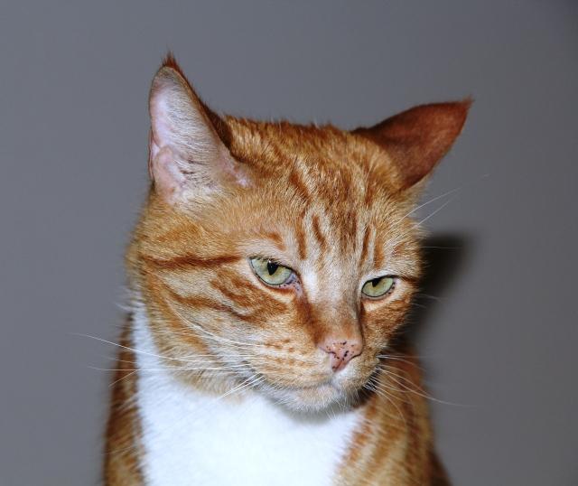 Gato dos