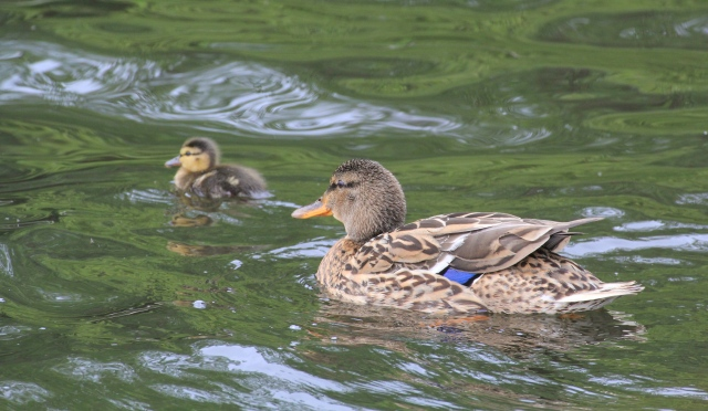Watchful parent