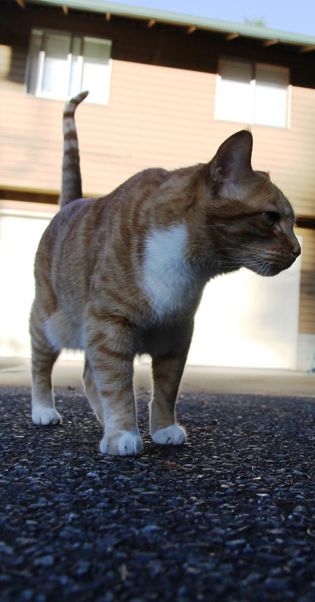 Tough guy cat